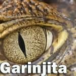 GARINJITA_X